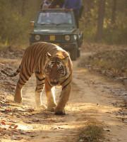 Travel Tips For A Jungle Safari, Travel Tips, Safari Guiding Tips, Safari Tips